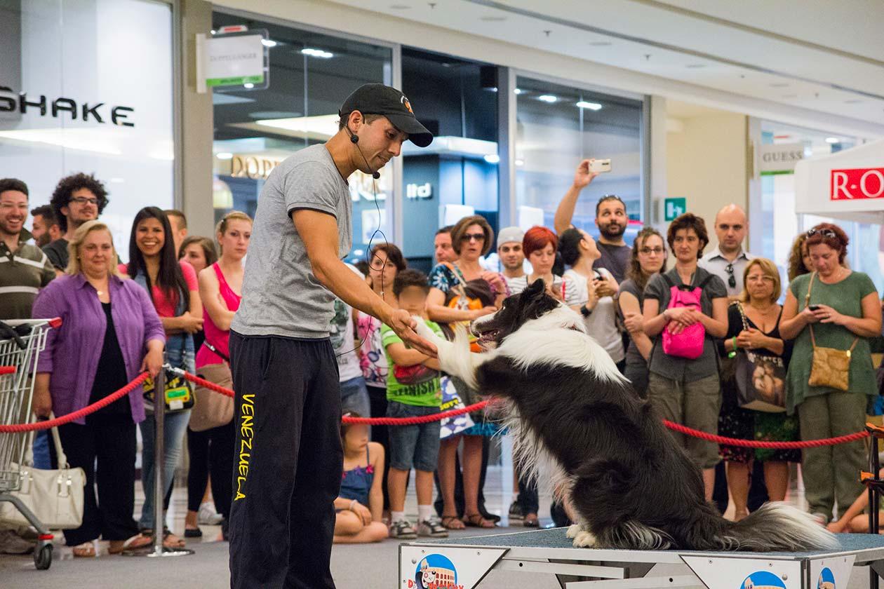 eventi-sensibilizzazione-campagna-contro-abbandono-animali-centro-commerciale-6